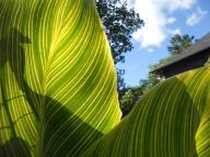 Cornell Botanic Gardens 9-11-12