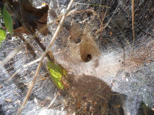 funnel web collecting shavings