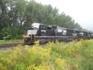 Norfolk Southern passingthrough the goldenrod in Ithaca 9-14-14