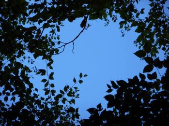 sky blue seen through shade