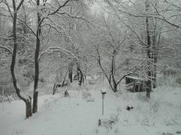 winter in our back yard ...
