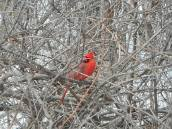 cardinal 3-19-17 old rr bed