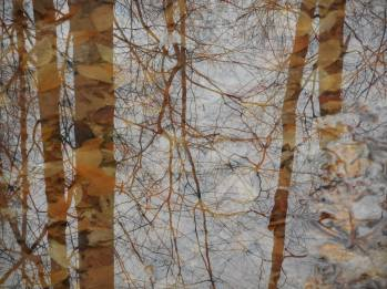 reflection overlays of bare trees in standing water big puddles with their treasury of leaves in Sapsucker Woods 3-27-17.