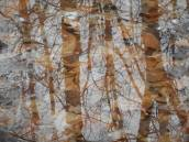 reflection overlays of bare trees in standing water big puddles with their treasury of leaves in Sapsucker Woods 3-27-17...