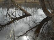 reflections at apsucker Woods main pond reflections... 3-27-17