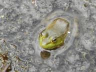 frog pond...
