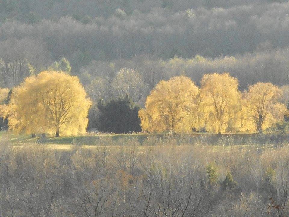 autumn light in willows across Six Mile Creek gorge...taken from across the road from our house... 11-14-15-