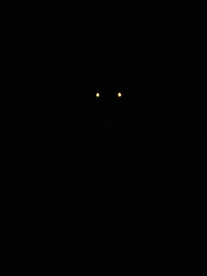 in the dark tonight a deer looking right at me... 11-14-17--