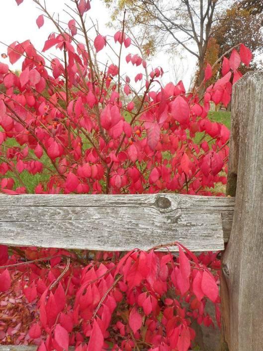 autumn silence-