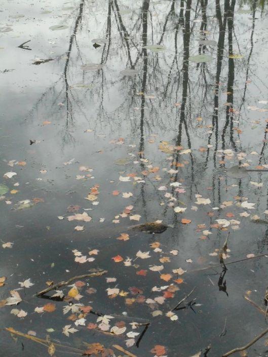 leaves adrift...