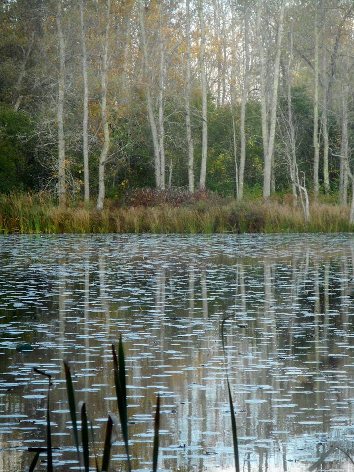 Sapsucker Woods pond views 10-10-18-.