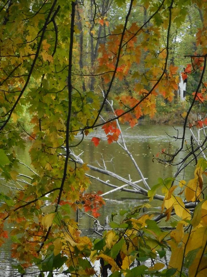 Stewart Park path through the woods along Fall Creek. 10-13-17